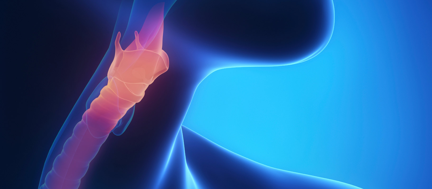 Esophagus Regeneration Successful in Human Patient
